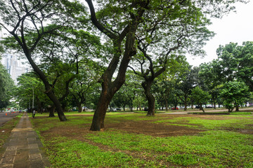 Green landscape at city park with big trees, grass and view of buildings photo taken in Jakarta Indonesia