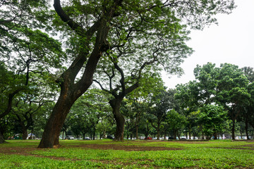 Green landscape at city park with big trees and grass photo taken in Jakarta Indonesia