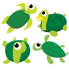 Cartoon Turtle and Tortoise