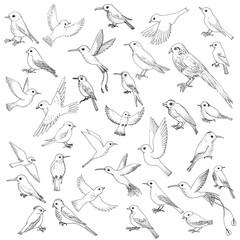vector set of birds