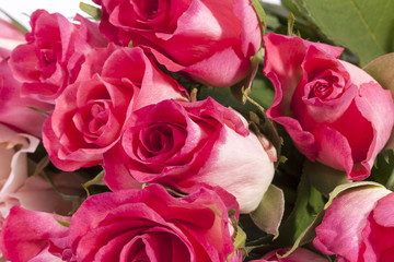 Bouquet of pink roses, close up