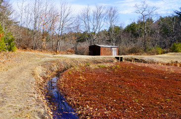 Rustic shed on cranberry bog