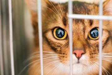 Gatto in gabbia, Sono in Trappola