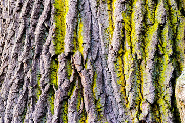 Tree bark texture with detail of moss and lichen on wooden fence.