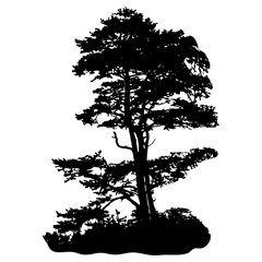 Silhouette of a tree on a white background. Pine. Vector.