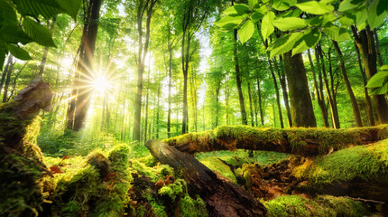 Wall Mural - Green forest scenery with the sun casting beautiful rays through the foliage, mossy lumber in the foreground