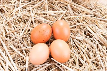 Vier Hühnereier im Stroh
