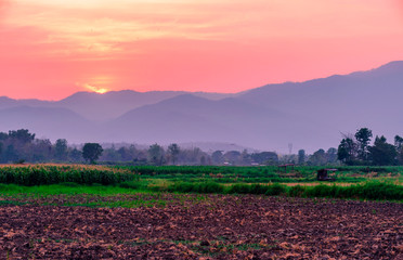 Wall Mural - The sun sets of Corn farm in Thailand.