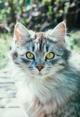 Пушистый серый домашний кот в весеннем саду