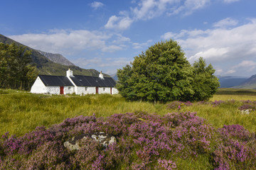 Lovely white house in scenic Glencoe in beautiful heather landscape