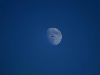bird flying moon texture background