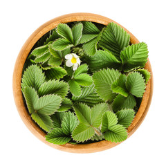 European wild strawberry leaves in wooden bowl with single white flower. Fragaria vesca. Fresh green edible leaves, used for teas and salads. Macro food photo close up from above on white background.