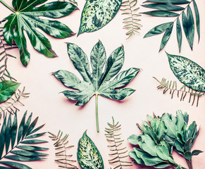 Wall Mural - Creative layout made of various tropical palm and fern leaves. Exotic plants on pastel pink background, top view, flat lay
