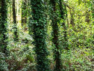 Spring forest in Northern Ireland