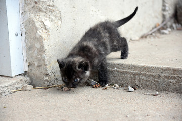 Calico Kitten Venturing Out into the World