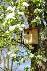 Nichoir  oiseau, arbre pommier en fleurs , printemps