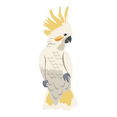 cockatoo bird icon over white background. colorful design. vector illustration