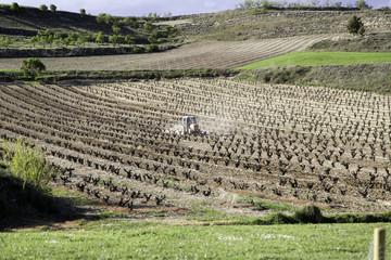 Tractor in vineyards