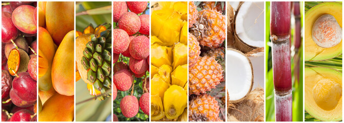 collage de fruits tropicaux