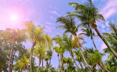Sunlight shining through tropical palm trees. Summer, travel, vacation and tourism concept.