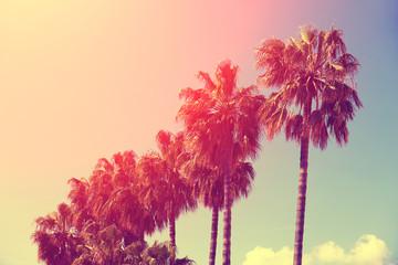 Palm trees against sky against sunset sky