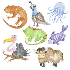 Set Animals Watercolor Hand-Painted Isolated