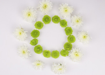 flat lay frame with green and white Chrysanthemum flowers on white background. top view