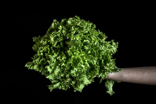 Hand holding the kale