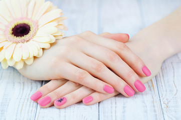 Hands with pink color nails manicure and delicate pink daisy flower