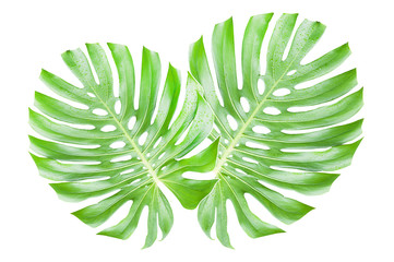 Two Leaves Together on isolated white background