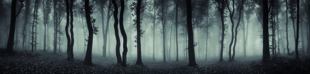 Photo sur Aluminium Forets dark forest panorama fantasy landscape
