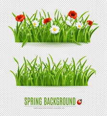 Spring and summer grass with white and red flowers, isolated on transparent background, vector illustration