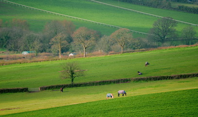 Wall Mural - Agriculture landscape of farmland fields at beginning of spring in East Devon, England