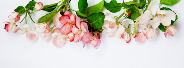 Natural floral composition with Apple flowers