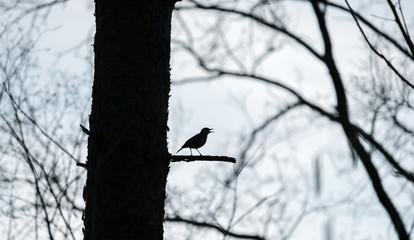 Bird forrest song