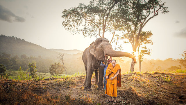 Mae Hong Son, Thailand: November 27, 2016 an unidentified monk Chang, a young monk of the Buddhist faith. The expression of an elephant and mahout elephant. in Mae Hong Son, Thailand.