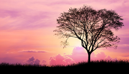Silhouette tree and grass in Pink purple sky cloud background