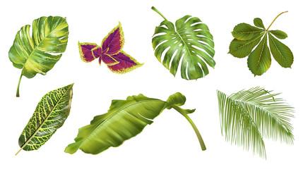 Tropical plants set