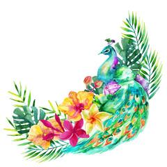 watercolor peacock