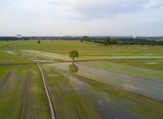 Arial view of paddy field during sunset.