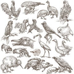Birds. Animals around the World - An hand drawn full sized pack. Line art.