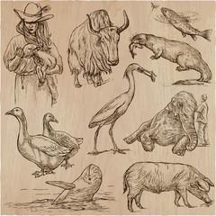 Animals around the World - An hand drawn vector pack. Line art.