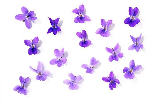 Veilchenblüten