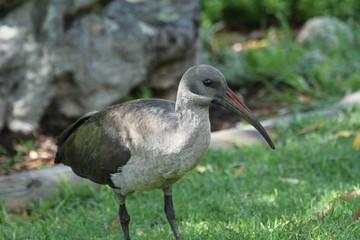 Oiseau sud-africain