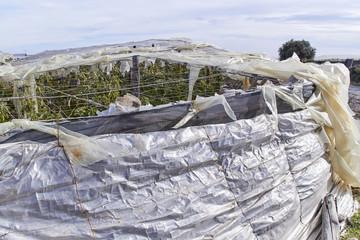Torn plastic greenhouse at El Ejido, Almeria