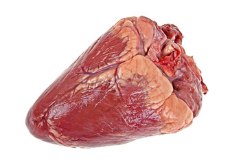 Beef heart isolated on a white background