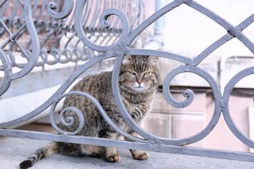 Cute cat sitting outside
