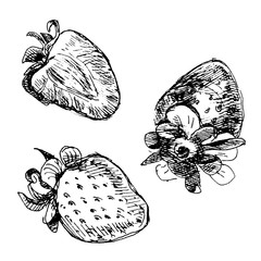 The set of three strawberries drawn in pen and ink.