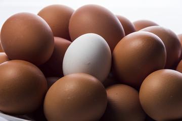 Huevos frescos de gallina