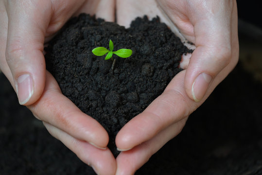 Woman hands holding Little seedling in black soil. Earth day and Ecology concept.